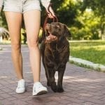 Tips For Making Your Super Luxury Villa Pet Friendly